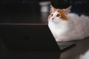 写真:イメージ猫とパソコン